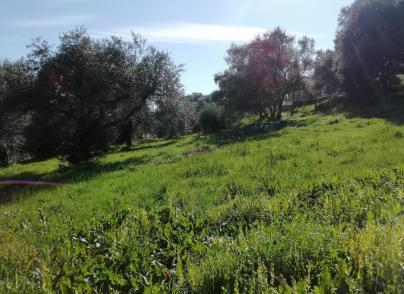 Investment  land plot  with  sea view