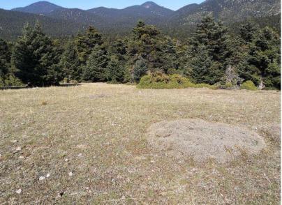 Land plots in Kroki, Delfoi